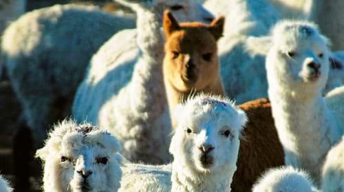 Pferdeboxen für den Winter
